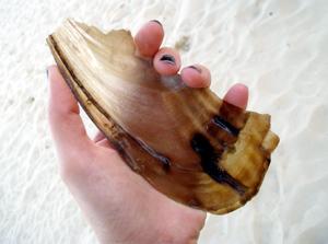 Shell_sept_07_internet