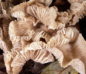 Fungi_3_blog