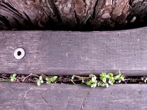 Mini_plants_between_boards_blog