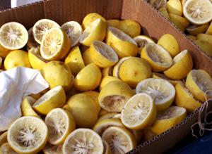 Lemons_folk_fest_dec_07_blog
