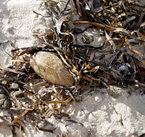 Beach_seed_jan_08_blog