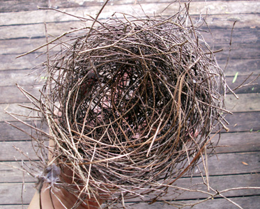 Birds_nest_1_feb_08_blog